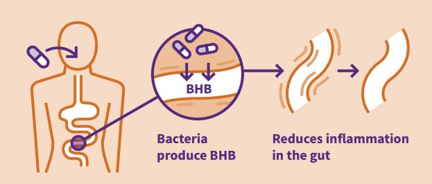3HB drug delivery to gut halts inflammation